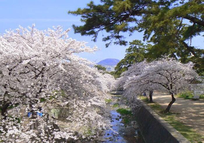 夙川公園(公園)まで125m