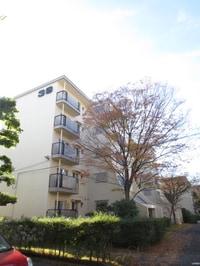 東大路高野第3住宅39棟(301)
