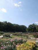 靱公園(公園)まで80m