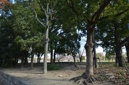 真田山公園