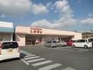 ファッションセンターしまむら城東店(ショッピングセンター/アウトレットモール)まで4203m